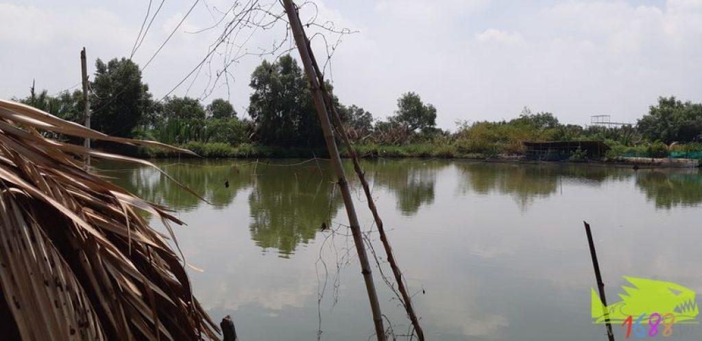 Hồ câu cá tôm giải trí Thành Phương
